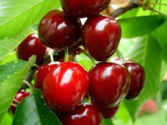 Tabella Nutrizionale - Frutta Semi Acida