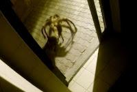 Pegadinha assusta as pessoas com cachorro aranha no meio da noite
