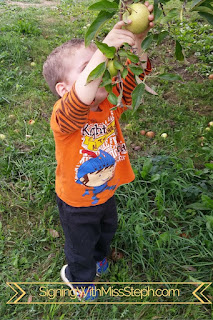 32 month old pulls apple from a low tree branch