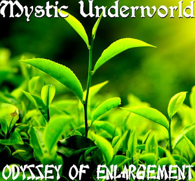 Odyssey of Enlargement Front Cover