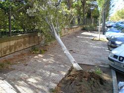 Un tornado hizo destrozos en Antoni Gaudí