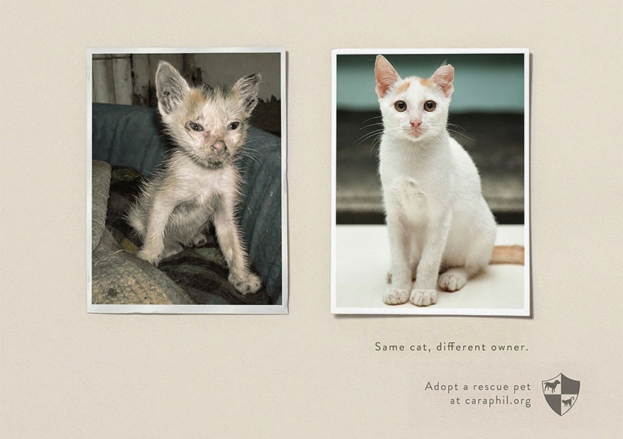 40 Of The Most Powerful Social Issue Ads That'll Make You Stop And Think - Animal Abuse And Shelters: Same Pet, Different Owner