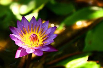 Beautiful Balinese flower