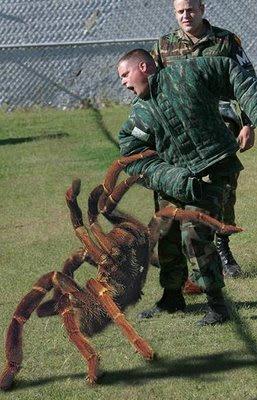Huntsman Spider Size Camdeath9000: Largest ...