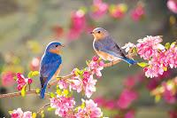 Spring.jpg (849×565)