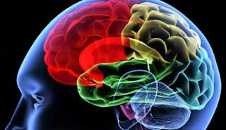 cerebro celulas madre