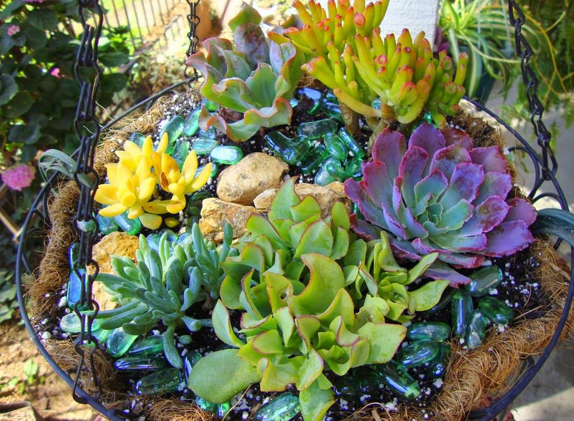 10 Especies De Cactos E Plantas Suculentas Faceis De Cultivar E