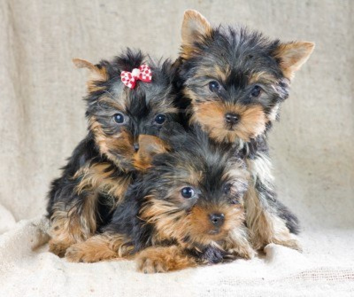 Small Cute Dogs In England