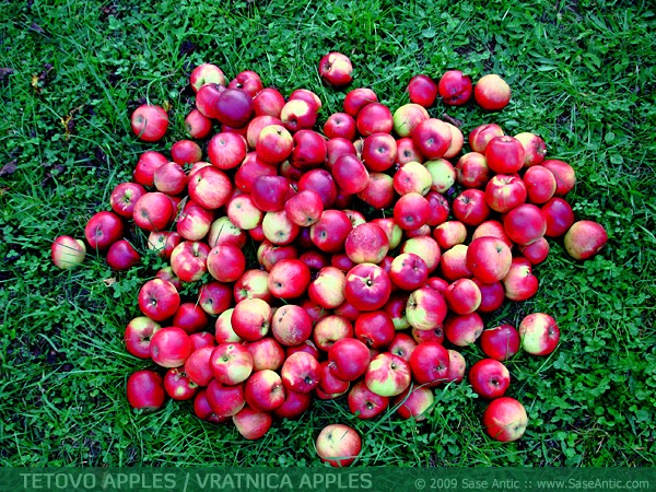 Photo of Tetovo apples / Vratnica apples. Autumn harvest in Vratnica.