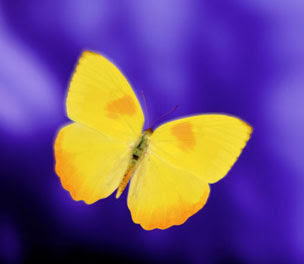 the spiritual meaning of butterflies it means new life or in other ...