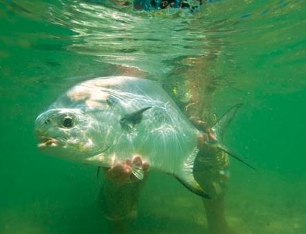 Lake erie ultimate angler fishing blog for Plenty of fish erie pa