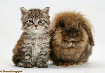 Foto Lucu Kucing dan Kelinci