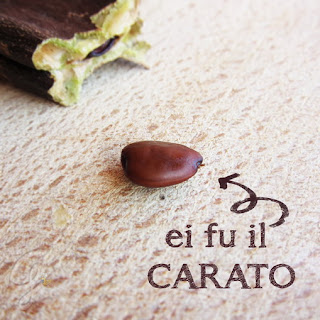 Il seme di carruba