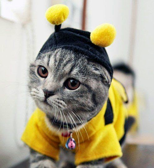 Bumble Bee Cat Halloween Costume