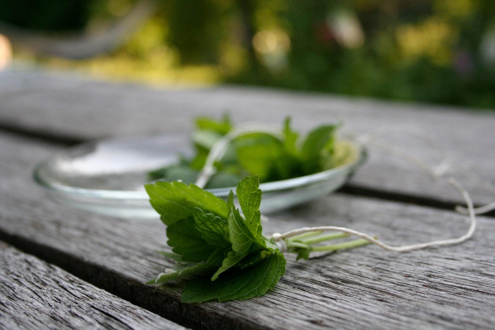 Öarnas trädgårdsplanering: gör te på citronmeliss