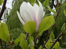 Mult Verde ... şi ALB, de 8 Martie 2011