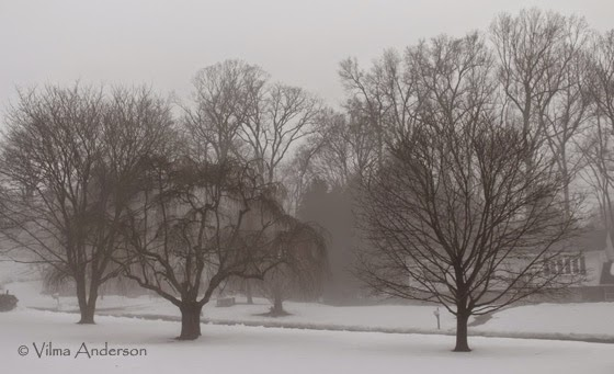 View of a street and trees in intense fog and snow