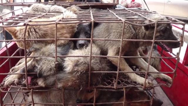 Consumo de carne de cachorro na China