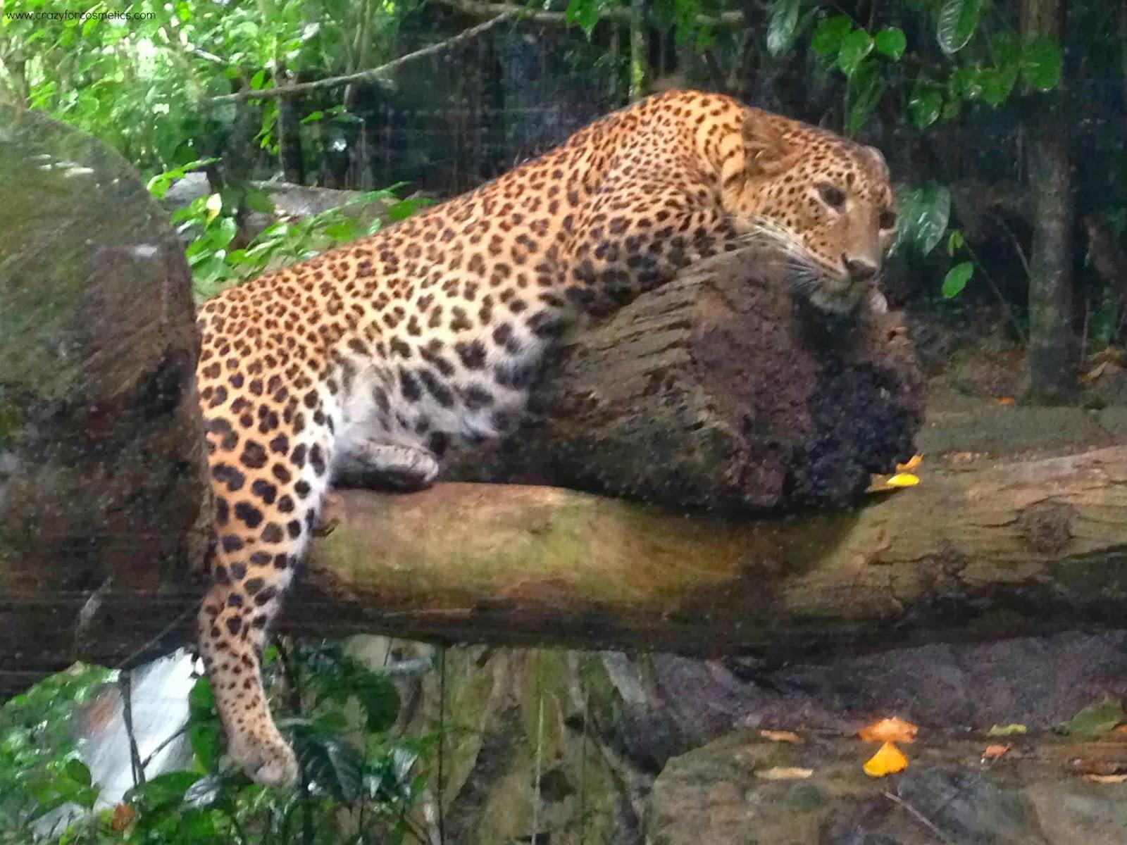 Singapore Zoo Safari-Singapore Zoo review