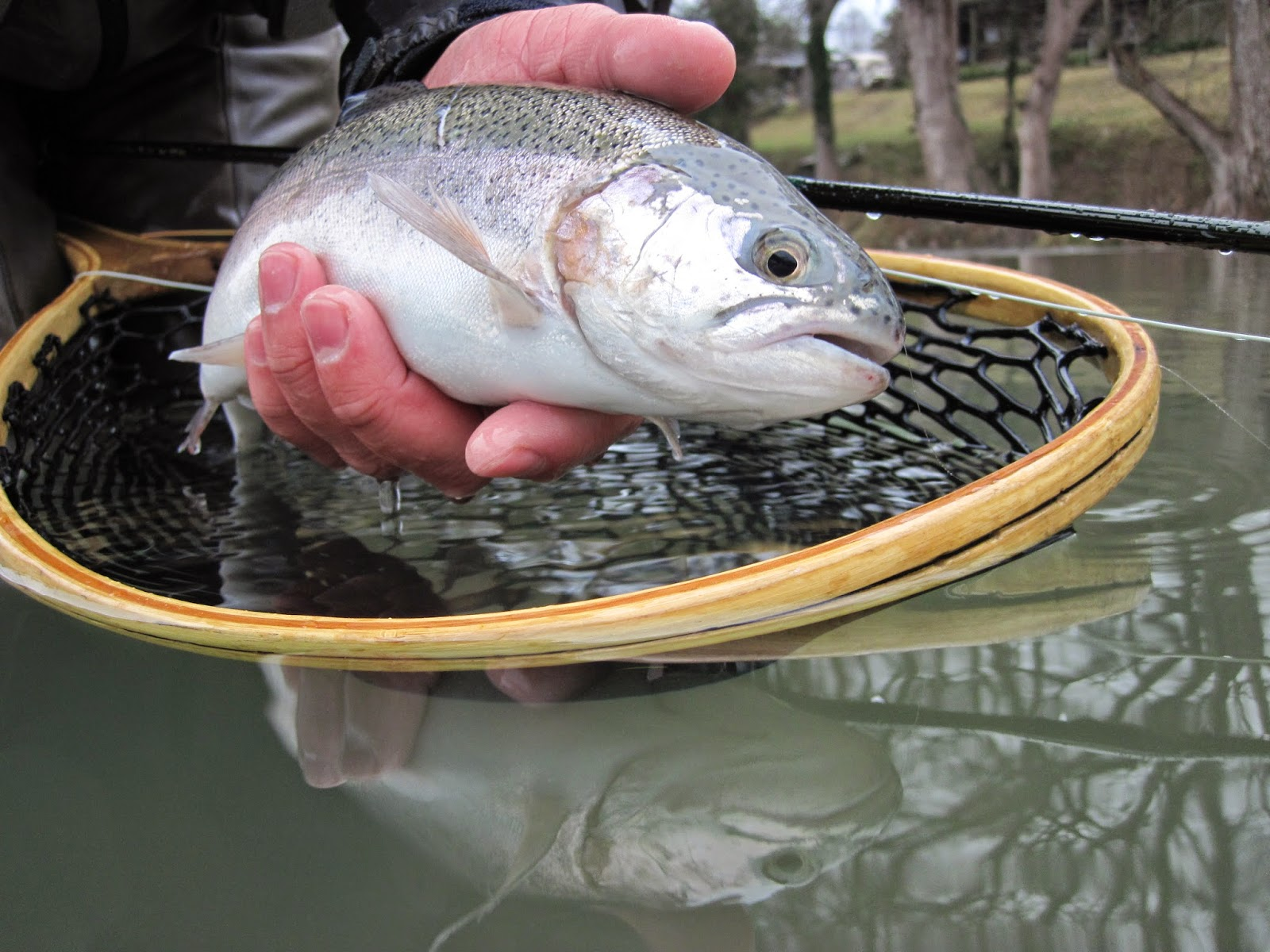 2flyfish4 tour of texas guadalupe river trout for Guadalupe river trout fishing