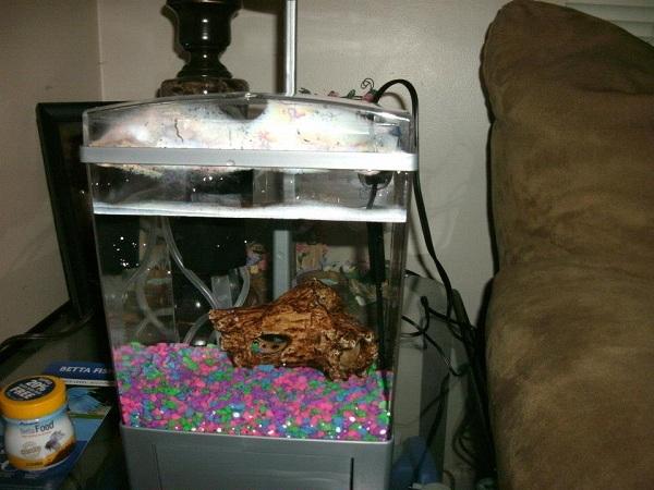 Neko random my new betta fish for Betta fish tank heater