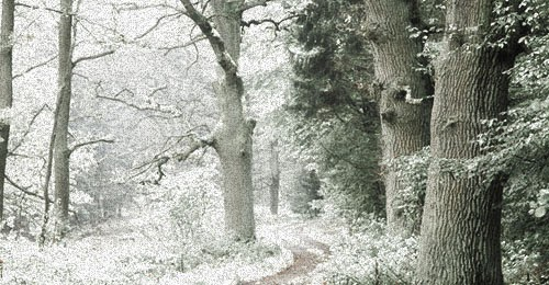 Infrared Photo Effect in Photoshop