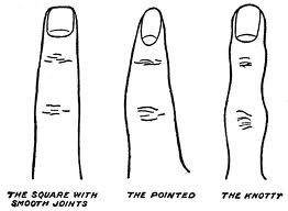 Finger Characteristics and Shapes