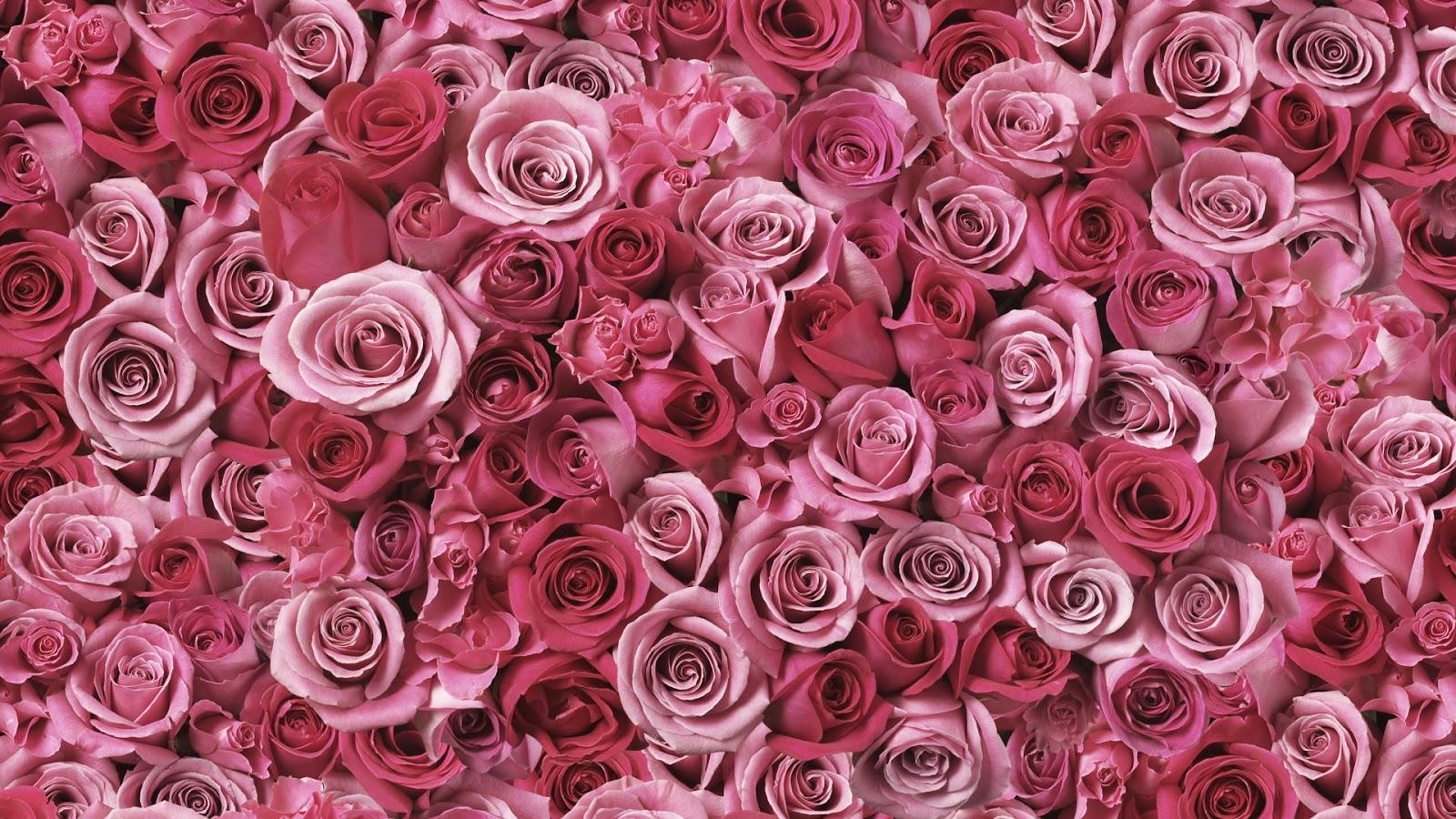 Flores bonitas flores lindas imagens de flores