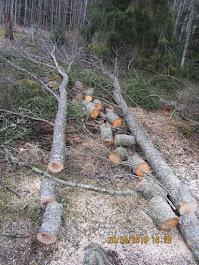 Pihapuiden kaadot käteisellä Tampere Pirkanmaa. Kotitalousvähennys