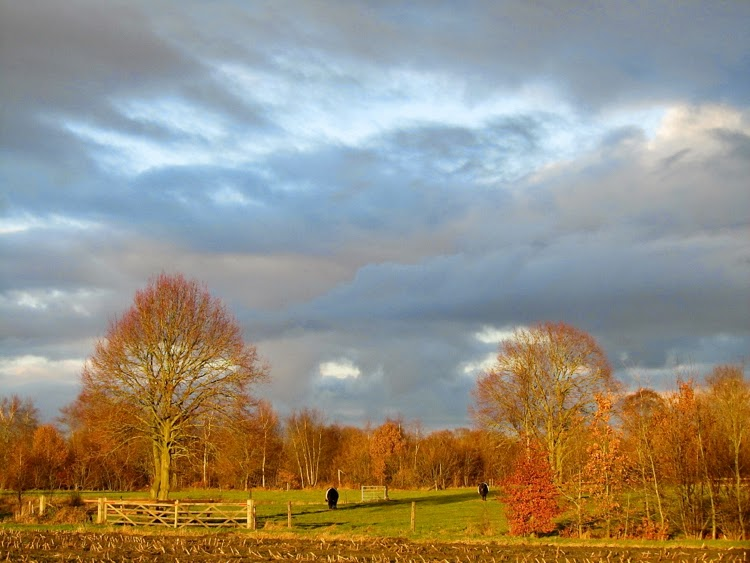 orange winter light on Dutch landscape