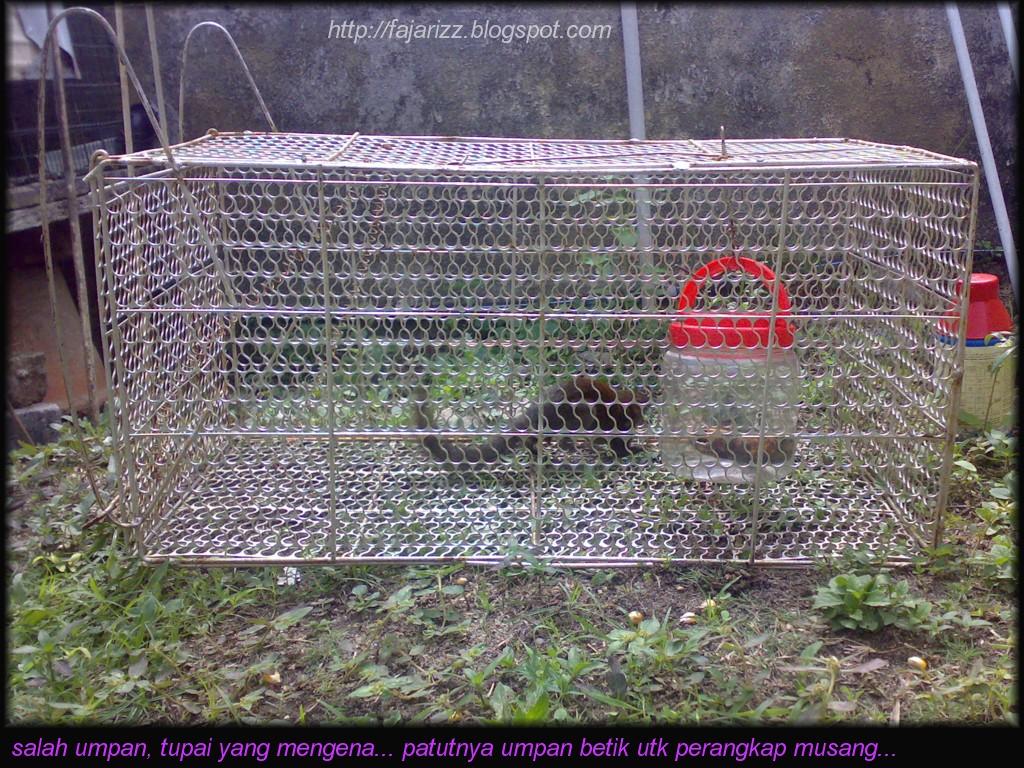 Medium Berkongsi Informasi Ayam Hutan Diancam Musang