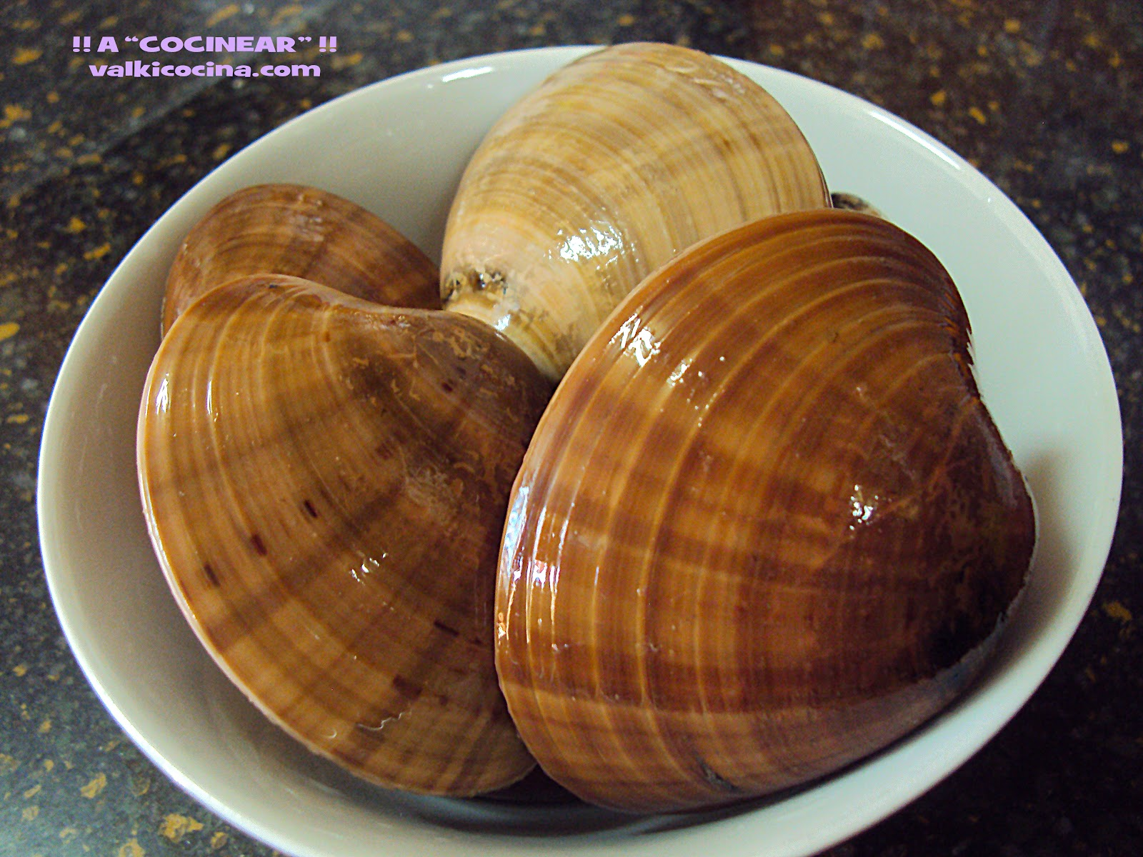 conchas finas