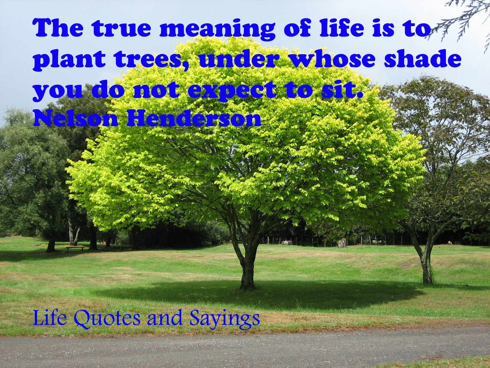 Plant Trees Under Whose Shade Quote : Life quotes and sayings