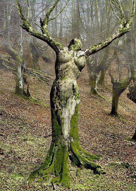 Ash Tree Nymphs Greek Mythology http://www.realwowz.net/2013/03/mother-nature-portugal.html