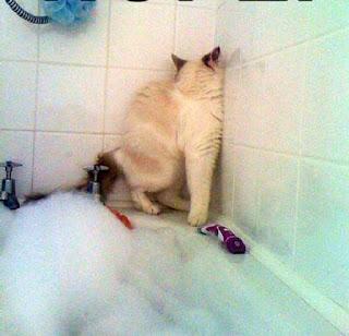 Cat wants toy boat in bath