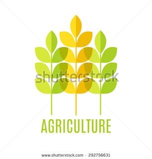 www.shutterstock.com/pic-292756631/stock-photo-agricultural-emblem-with-green-and-yellow-cereal-ears-on-a-white-background-isolated.html?src=Y6tkLvflnffjnVBiKVpTVg-1-27