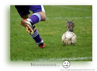 Imagenes graciosas con animales