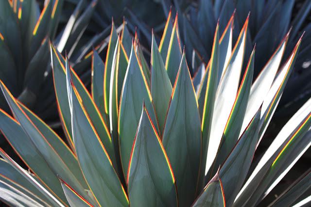 Santa Monica plants - weekend in Los Angeles, travel blog