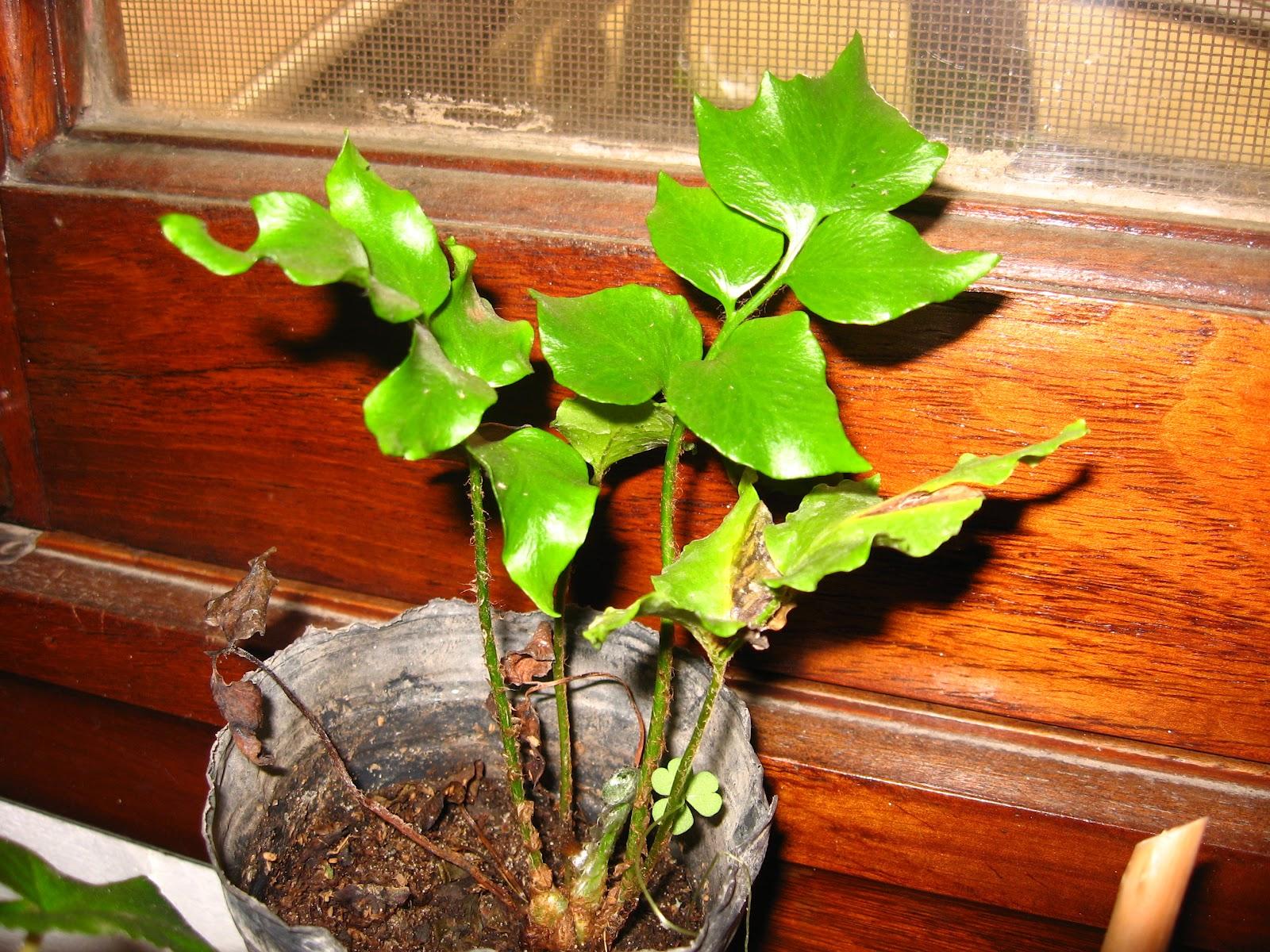 Explorando en el jard n plantas de anta o for Vivero casa jardin