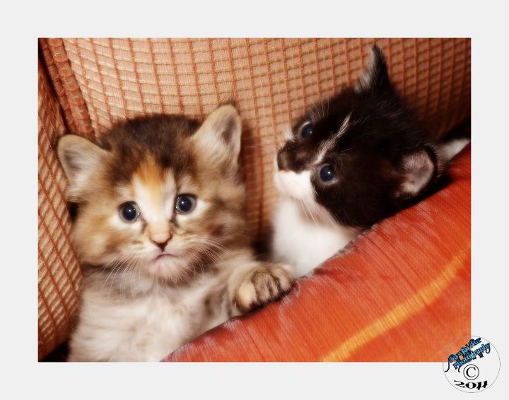 Gambar Kucing Jamuran godean.web.id