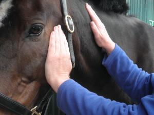 reiki, horse, healing, holistic