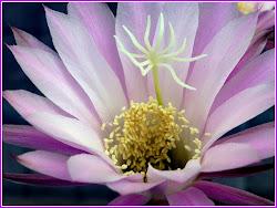 La flor del mes