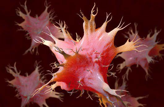 Parte do sistema imune não específico