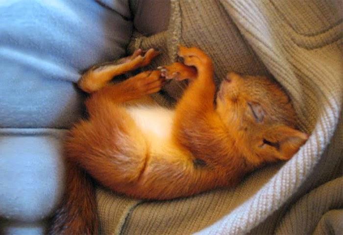 injured baby squirrel finland