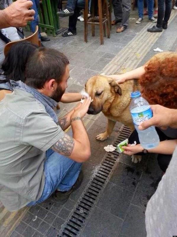 Демонстранты промывают глаза собаке, пострадавшей от слезоточивого газа, в Анкаре, 2013 год.