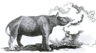rinocerontes prehistoricos Aphelops