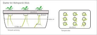 Cara Menanam Sawi dengan Sistem Hidroponik