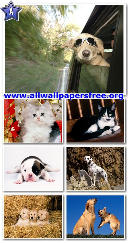 100 Beautiful Dogs and Cats Wallpapers 1280 X 1024 [Set 2]