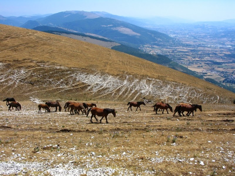 horses in the Apennine Mountains