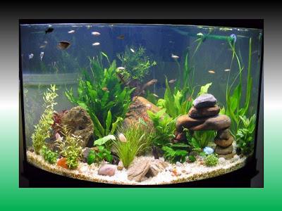 Trucos y consejos caseros peces felices - Decoracion para acuarios ...